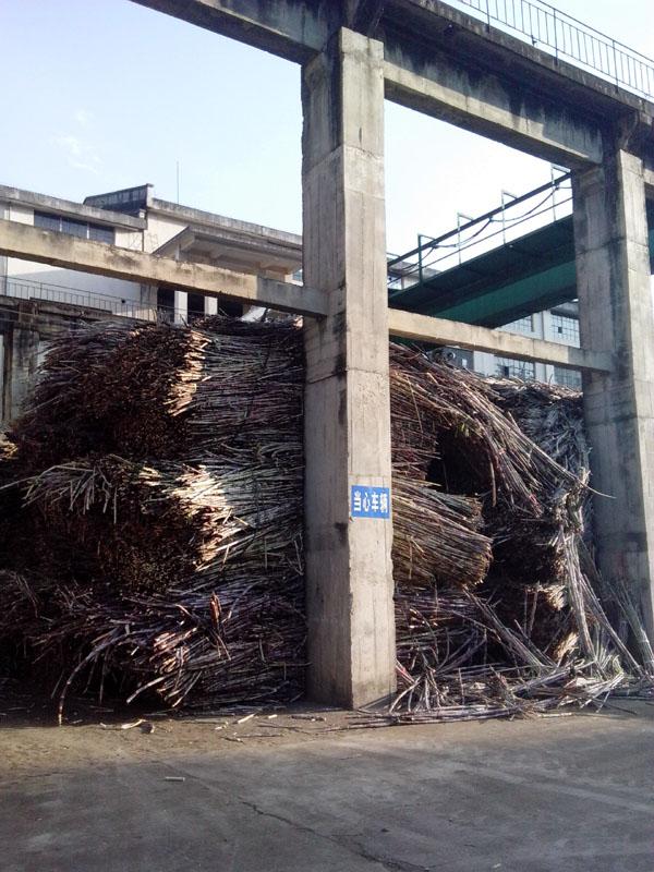 云南保山:康丰糖业(集团)公司应对糖市疲软出实招