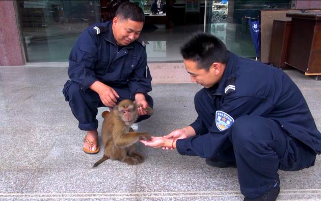 民警照顾野生动物826