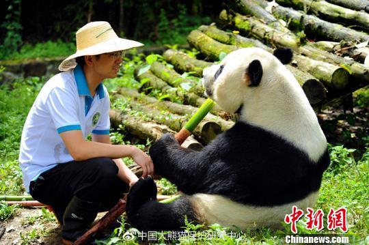 """大熊猫""""鹏鹏""""因病抢救无效死亡生前温馨照片令网友泪奔"""