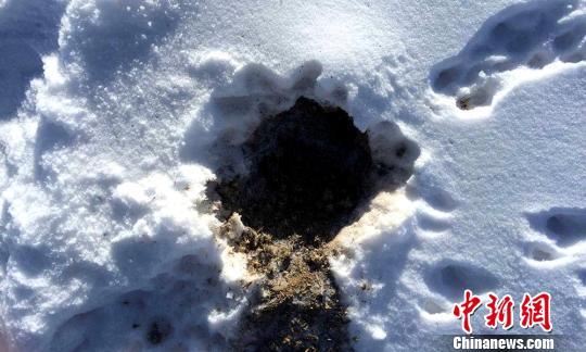玛多县境内积雪深度已达8厘米。 闫慧 摄