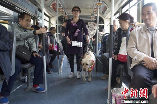 山西盲人携导盲犬闹市行走呼吁关注视障者出行