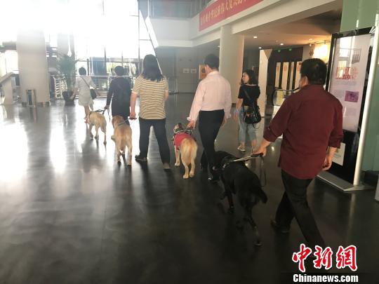 4位盲人在各自导盲犬的带领下进入公共场所。 杨静 摄