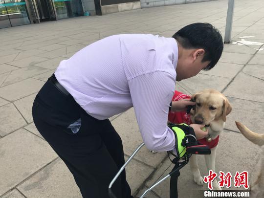 导盲犬的主人给其喂食物。 杨静 摄