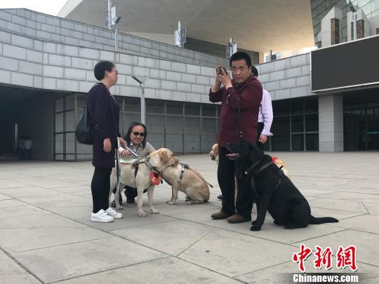 盲人与导盲犬在公共场所休息。 杨静 摄