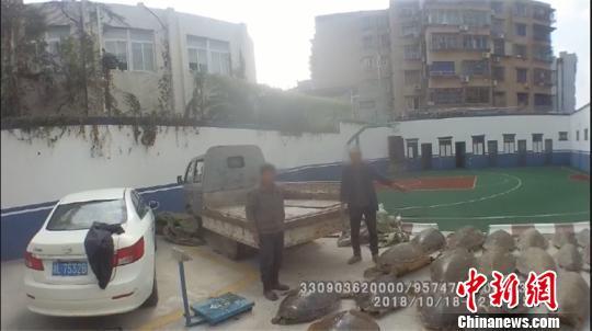 图为普陀警方查获冻海龟 普陀警方供图