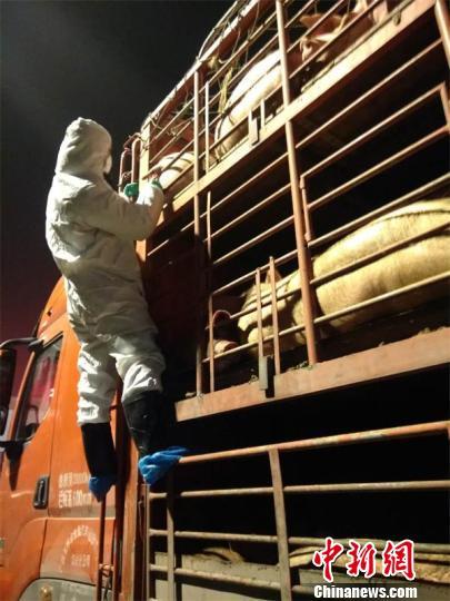 工作人员认真排查。 广安市农业农村局供图 摄